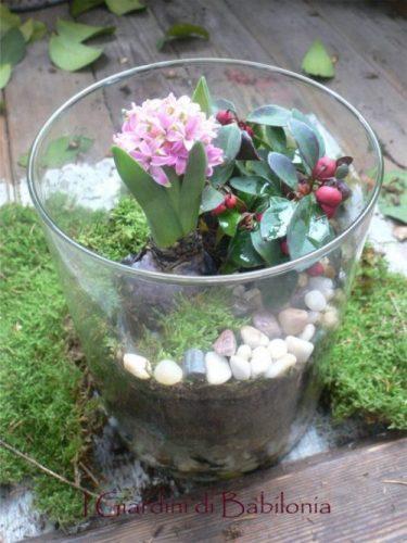 Bulbi In Vaso Di Vetro.Un Mini Giardino Nel Vaso Di Vetro E Tanti Auguri I