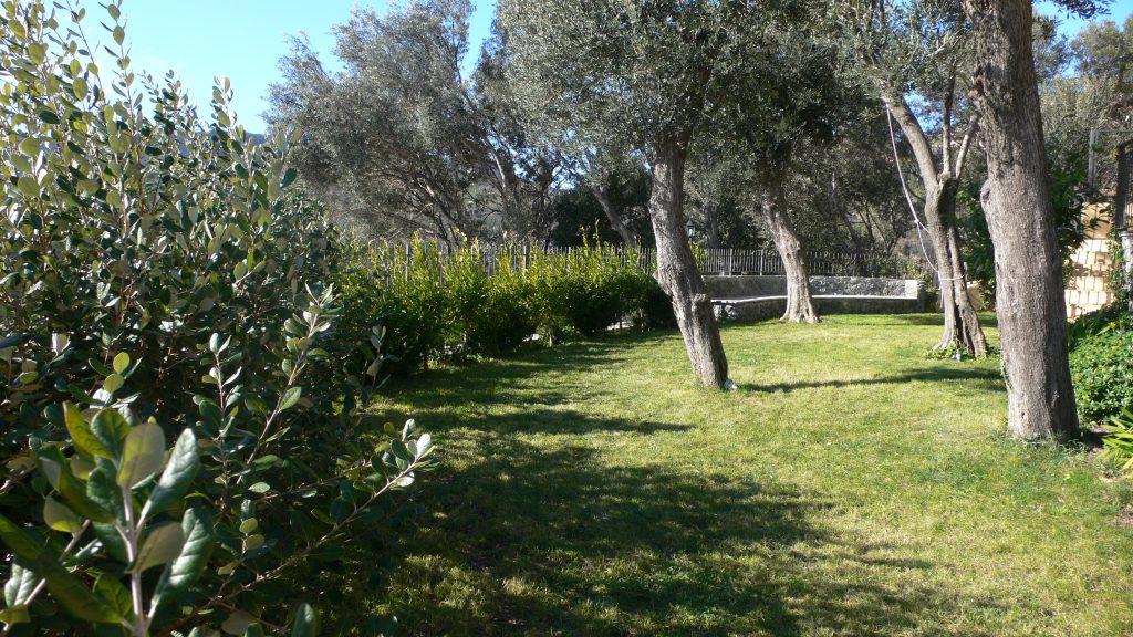 Giardino mediterraneo con ulivi i giardini di babilonia for Giardino mediterraneo