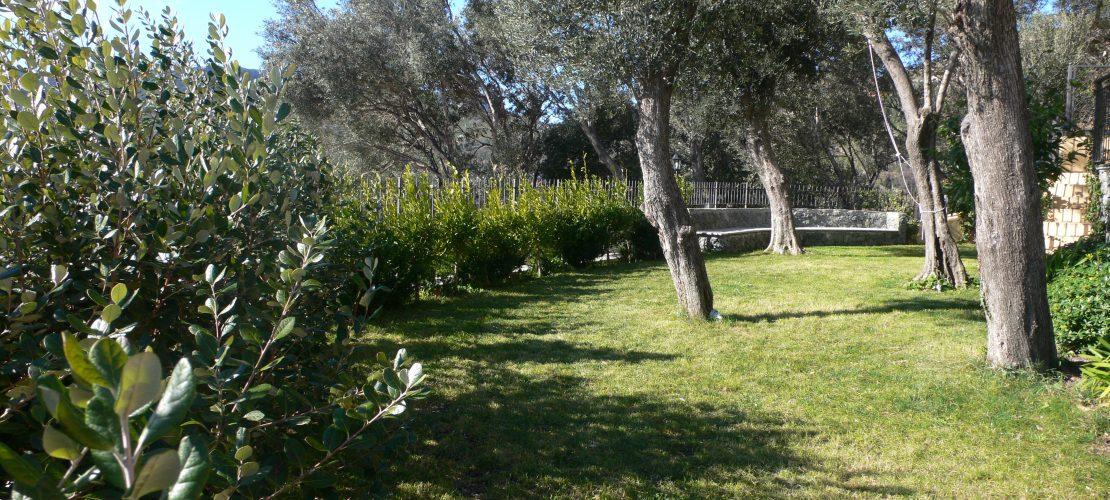 Giardini archivi i giardini di babilonia - Giardino con ulivi ...